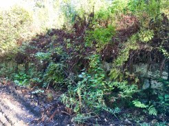 Old Stone Retaining Wall